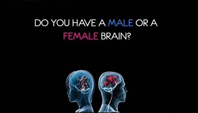 Do you have a male or a female brain?